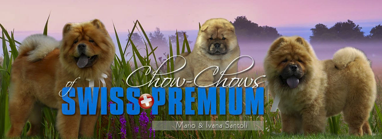 Chows of Swiss Premium